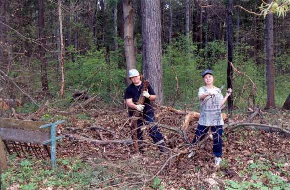 Скоро валежник в лесу можно будет собирать БЕСПЛАТНО