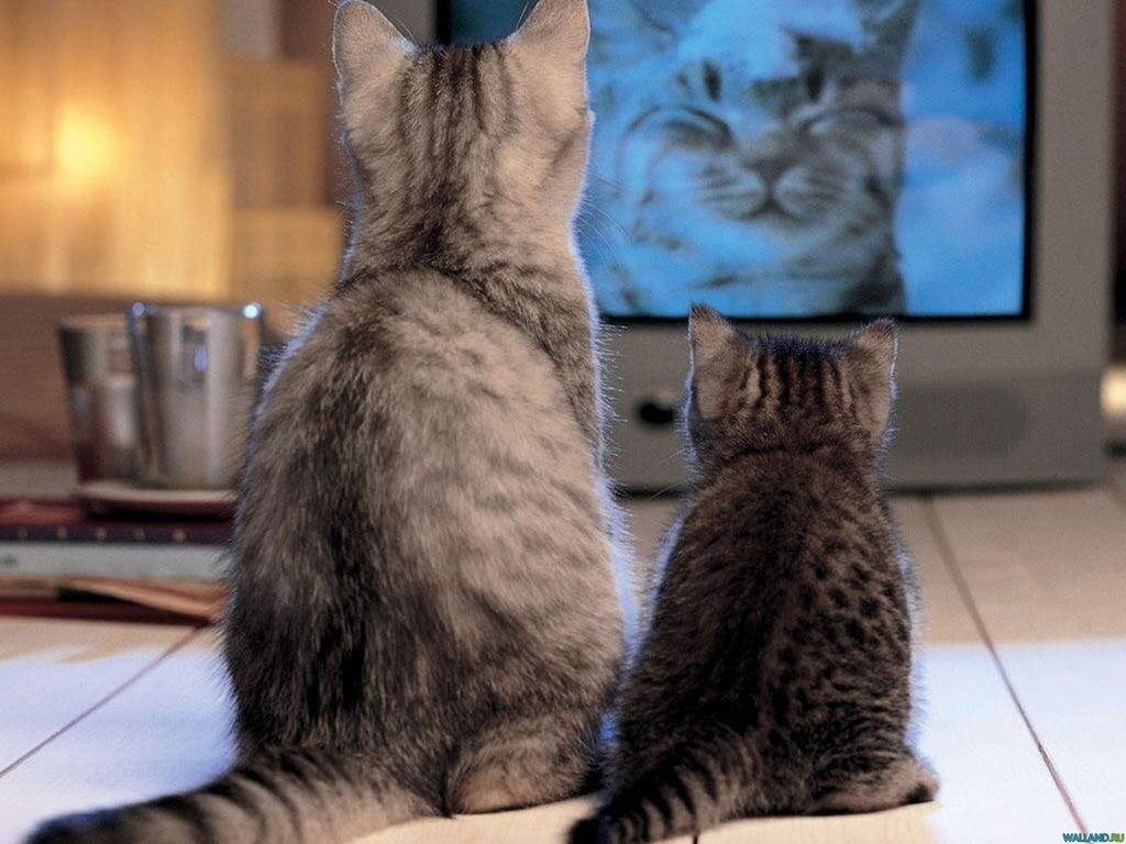 Анонсировано первое телевидение для животных