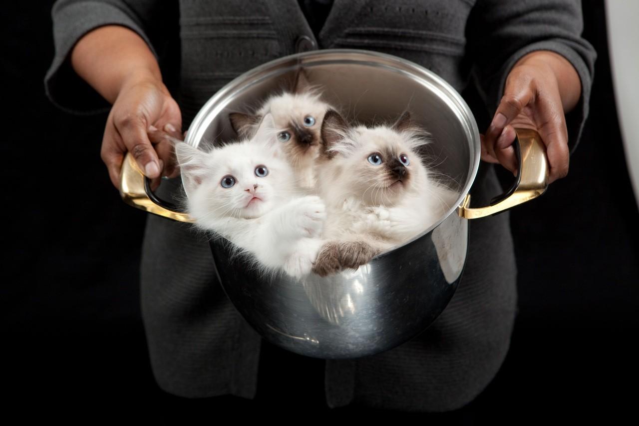 Маразм крепчает. В Москве планируют провести фестиваль кулинарии из котят!