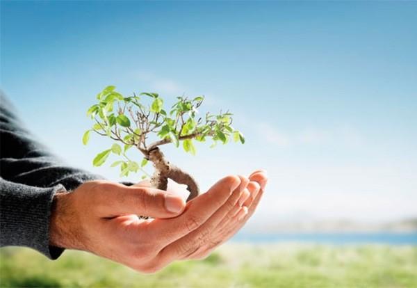 Минприроды и СУЭК подписали ряд соглашений по реализации природоохранных мероприятий на предприятиях Компании