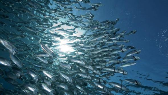 СУЭК вносит вклад в восстановление водных биоресурсов