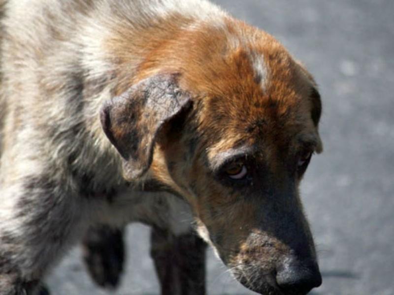 Под петицией с требованием принять закон о животных оставили подписи 200000 человек