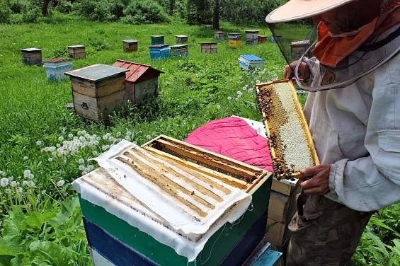Юрий Лужков запустил пчеловодство в Калининградской области