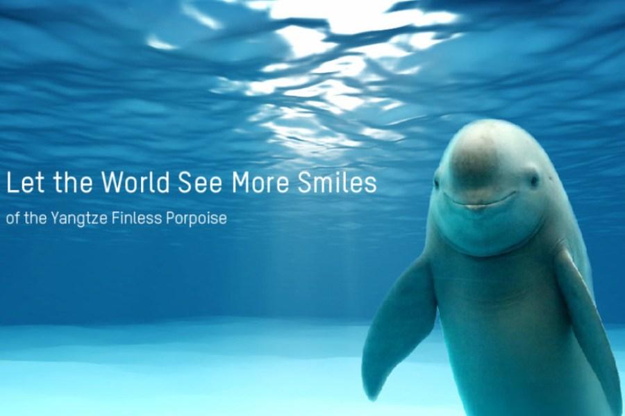 Hikvision, WWF и OPF реализует проект по защите бесперой морской свиньи