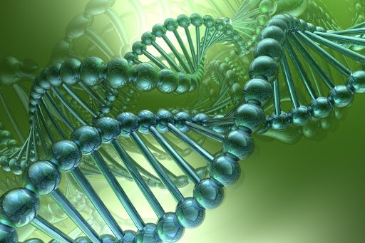 В столичных школах будут изучать генетику