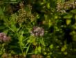Лидеры в структуре производства питомников выступают хвойные растения и лиственные кустарники